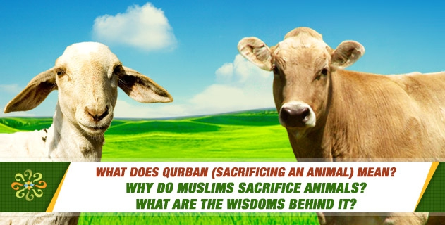 What does qurban (sacrificing an animal) mean? Why do Muslims sacrifice animals? What are the wisdoms behind it?