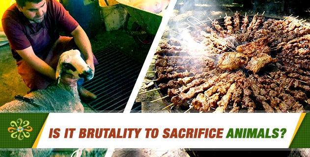 Is it brutality to sacrifice animals?