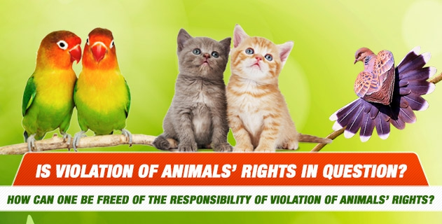 Is violation of animals' rights in question? How can one be freed of the responsibility of violation of animals' rights?
