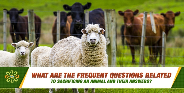 What are the frequent questions related to sacrificing an animal and their answers?