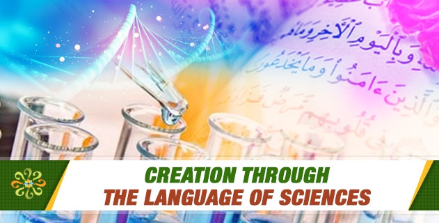 Creation through the Language of Sciences
